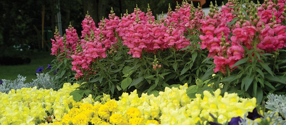 Riverview Garden Center Plants Annuals