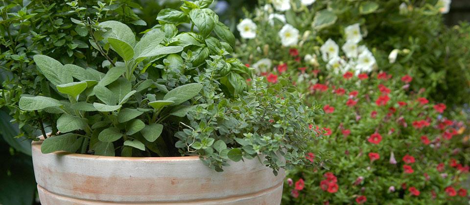 Riverview Garden Center Plants Herbs