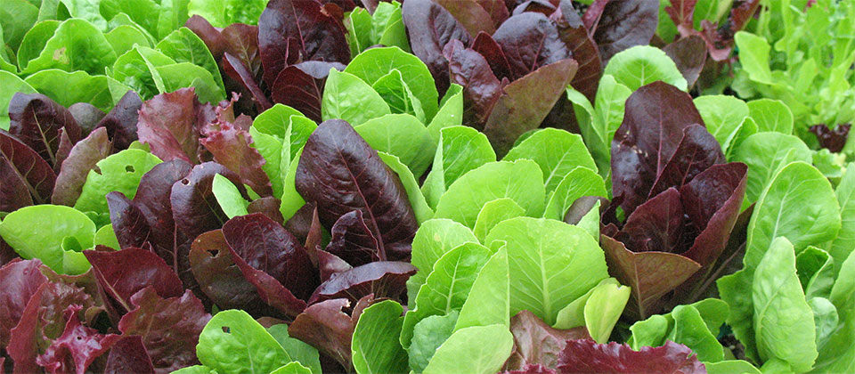 Riverview Garden Center Plants Vegetables